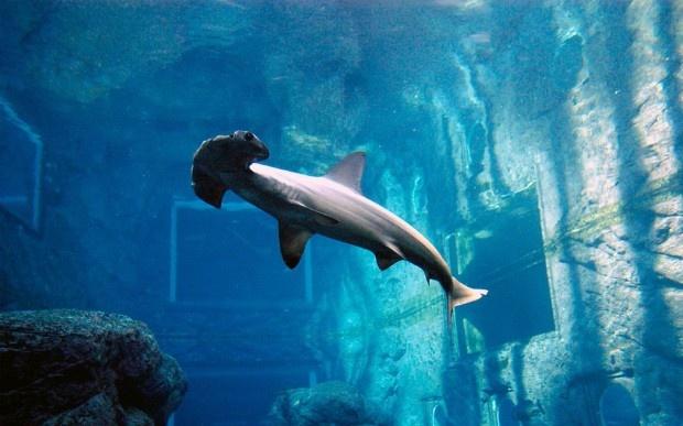 10 самых больших и удивительных аквариумов мира
