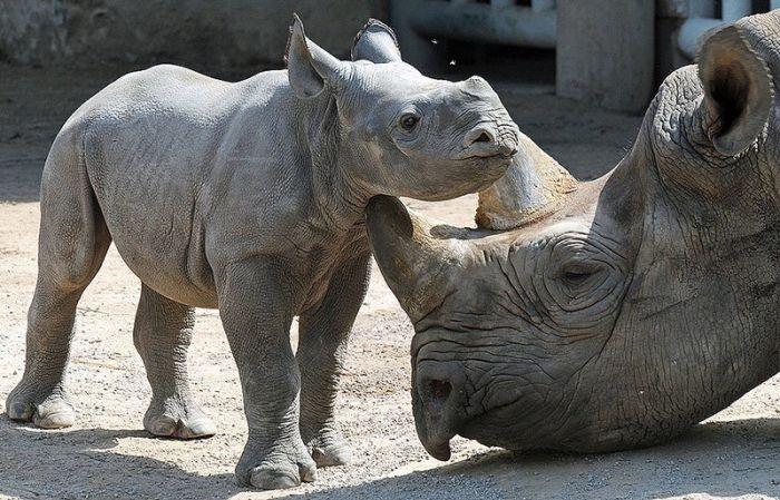 10 животных которые были истреблены человеком