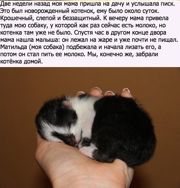 Новая мама котенку (10 фото)