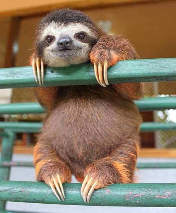25 животных, которые подарят вам счастье