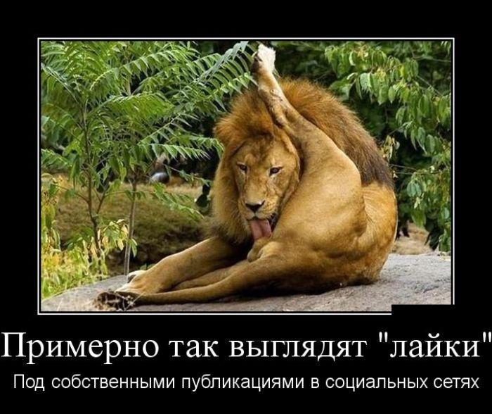 Демотиваторы (30 фото) 07.07.2014