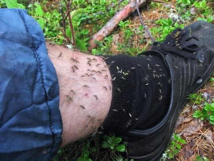 Делаем ловушку для комаров своими руками (2 фото)
