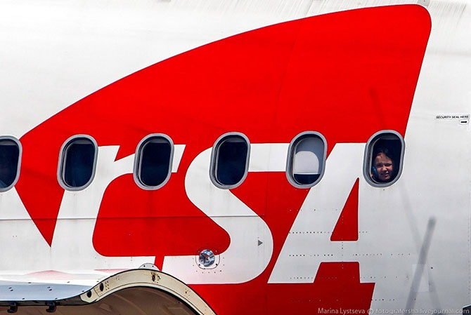 Как перевозят животных в самолете