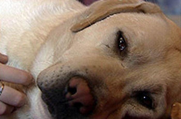 10 историй как собаки спасли жизнь