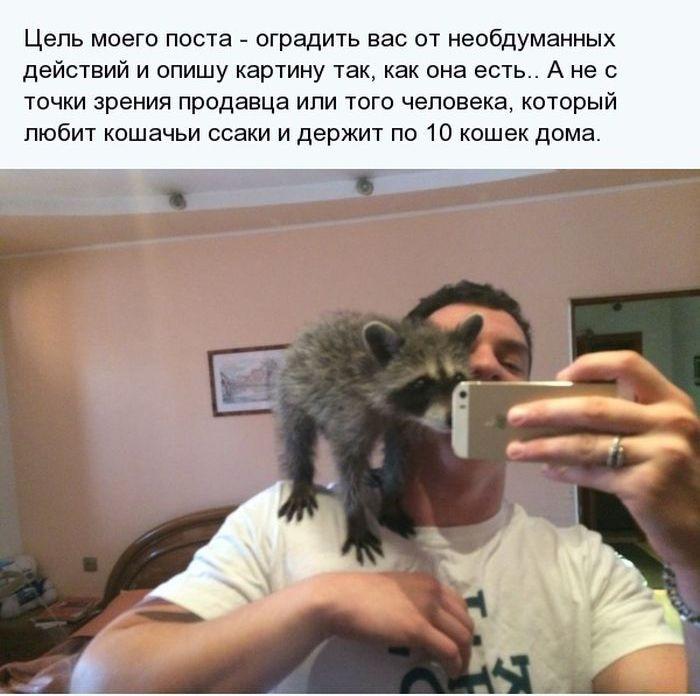 Аспекты владения необычного домашнего животного