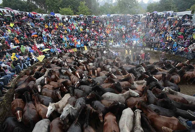 Как проходит фестиваль Rapa das Bestas