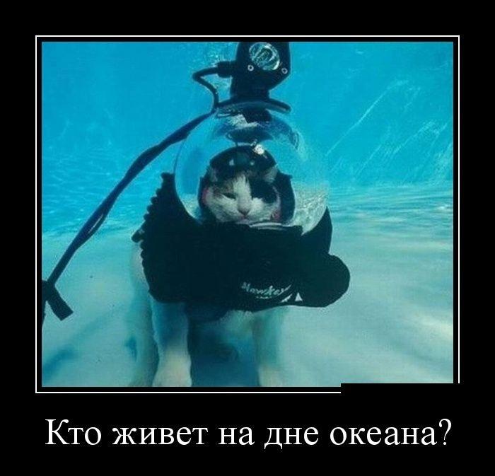 Демотиваторы (30 фото) 08.07.20149
