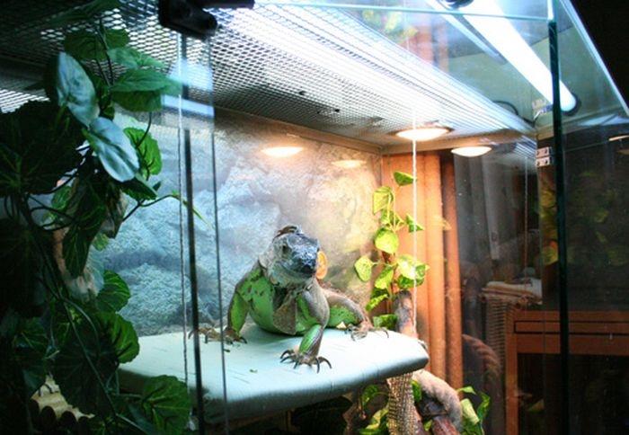 Холодильник владельца змей (2)