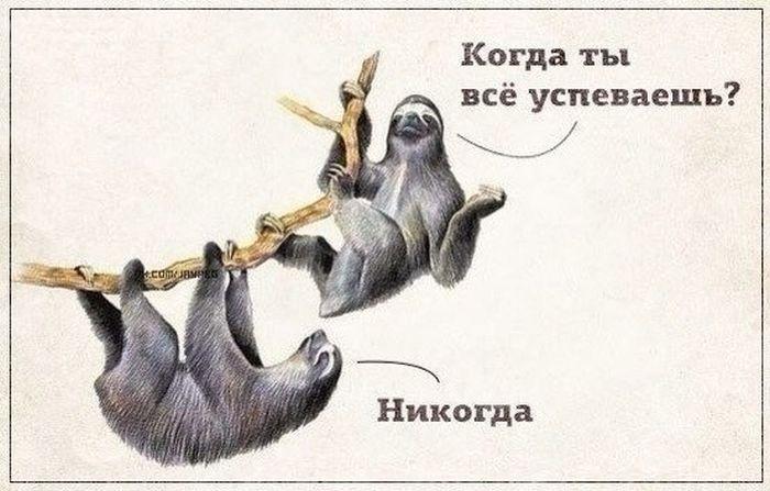 Прикольные картинки (100 фото) 11.07.2014
