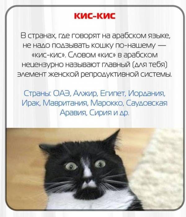 Русские слова, которые за границей превратятся в ругательства
