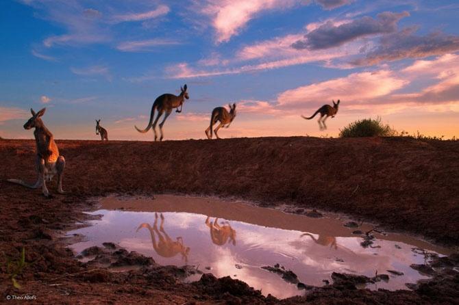 Лучшие фотографии дикой природы 2014