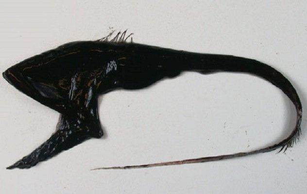 Животные с самыми странными особенностями тела