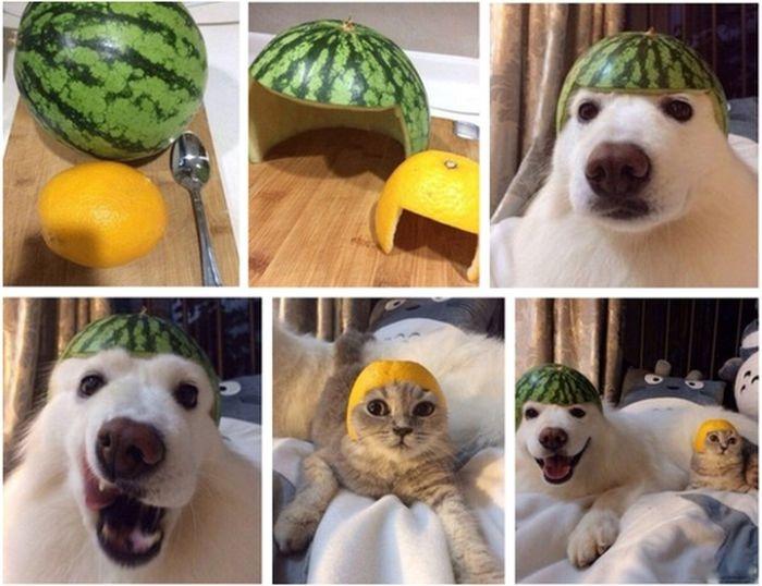 Смешные картинки (117 фото) 14.07.2014