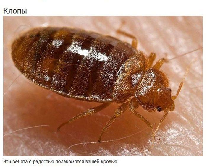 Мерзкие насекомые, которые могут жить в вашем доме