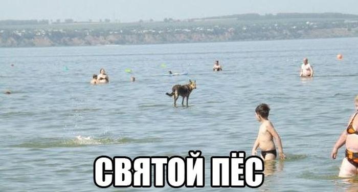 Прикольные картинки (120 фото) 16.07.2014