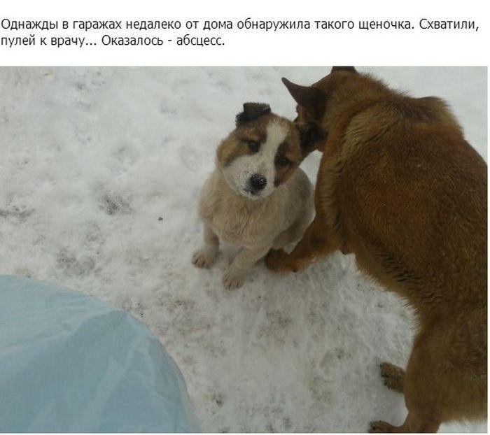 Не оставила в беде маленького щенка (11 фото)