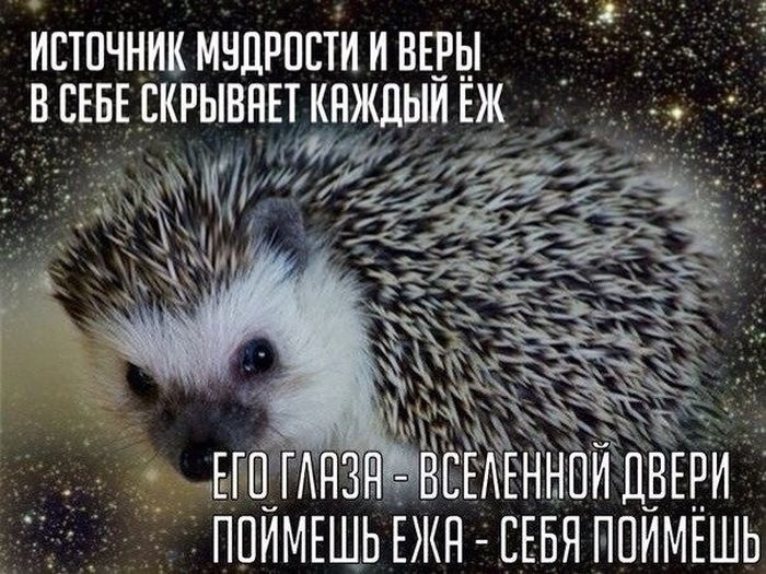 Прикольные картинки (130 фото) 17.07.2014