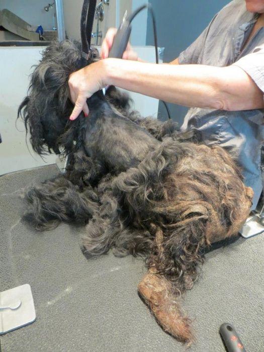 Девушка подобрала и подстригла комок шерсти (10 фото)
