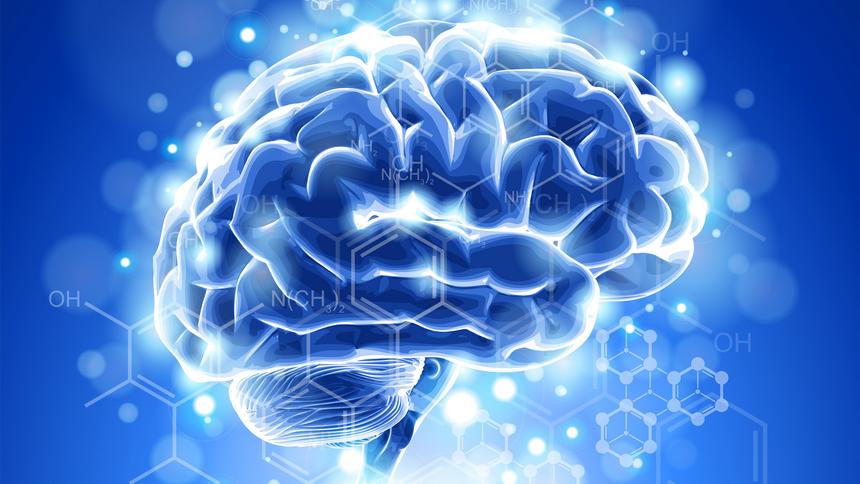 Человеческий мозг интересный факты