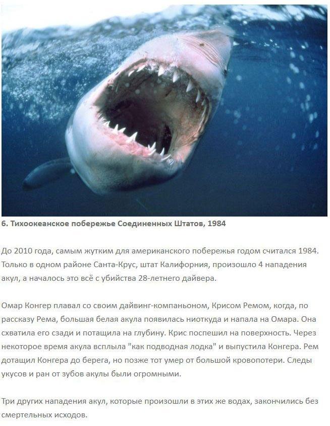 7 самых ужасных нападений акул