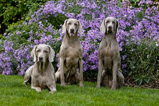 Великолепные тройки (34 фото)