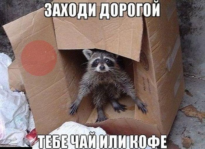 Прикольные картинки (119 фото) 21.07.2014