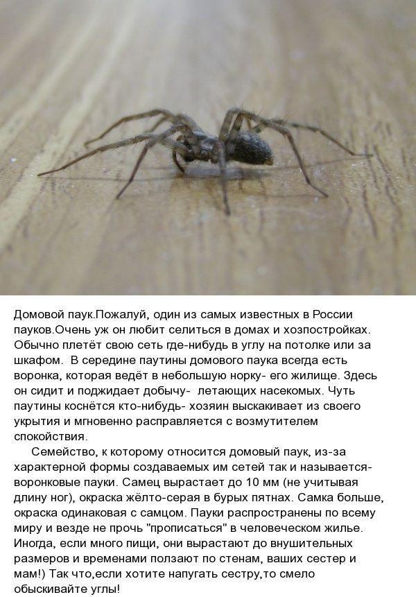Виды пауков обитающих в России (9 фото)