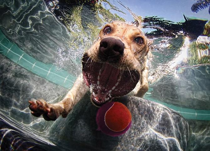 Удивительные подводные собаки (22 фото)