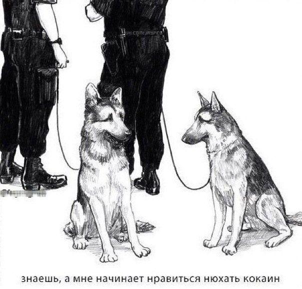 Смешные комиксы (20 картинок) 23.07.2014