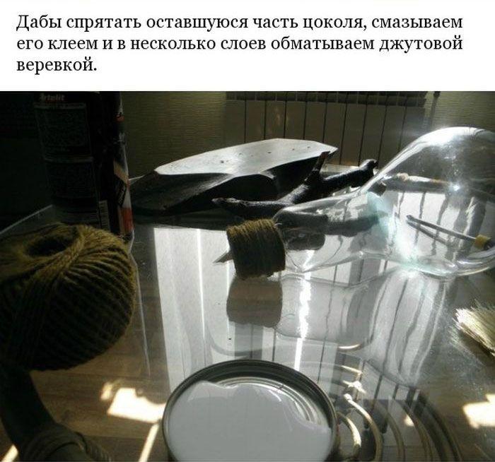 Делаем минисад внутри лампочки своими руками (22 фото)