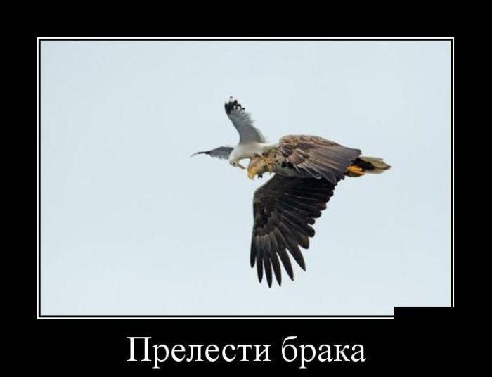 Демотиваторы (30 фото) 25.07.2014
