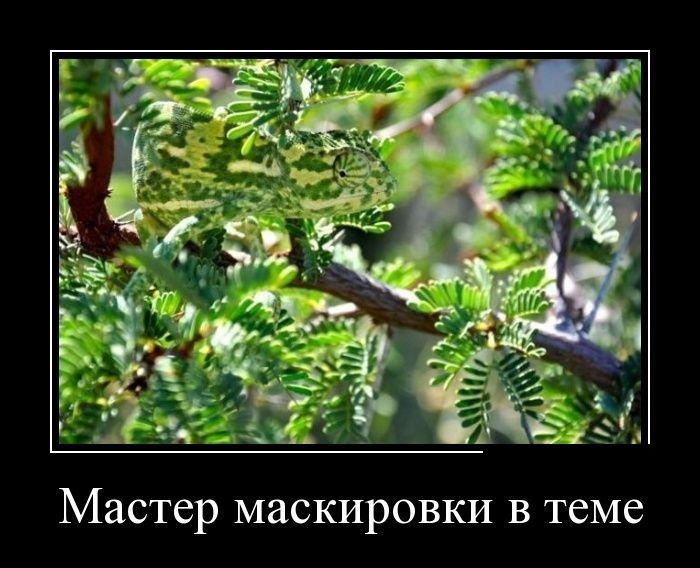 Демотиваторы (30 фото) 28/07/2014