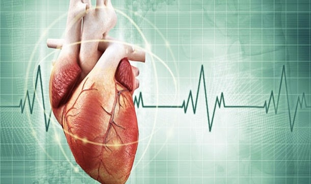 Удивительные научные факты о человеческом сердце