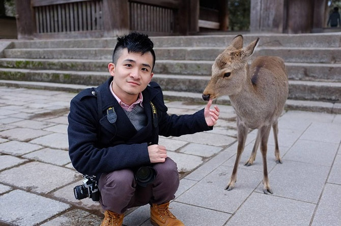 Тысячи оленей на улицах японского города