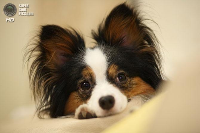 Топ 15 самых мелких пород собак