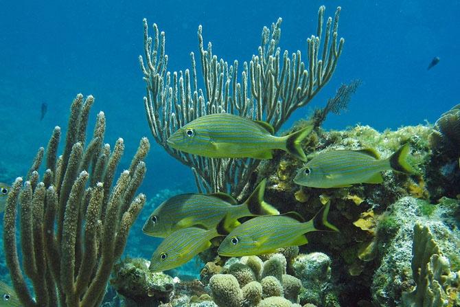 Топ 7 самых удивительных коралловых рифов в мире
