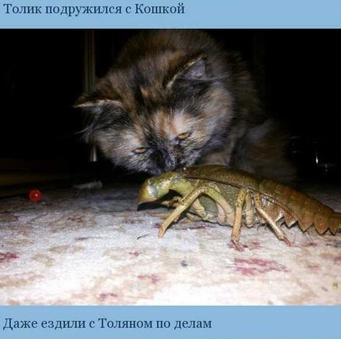 Приключения Толика (7 фото)
