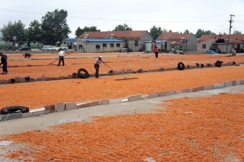 Как в Китае производят поддельные креветки (8 фото)