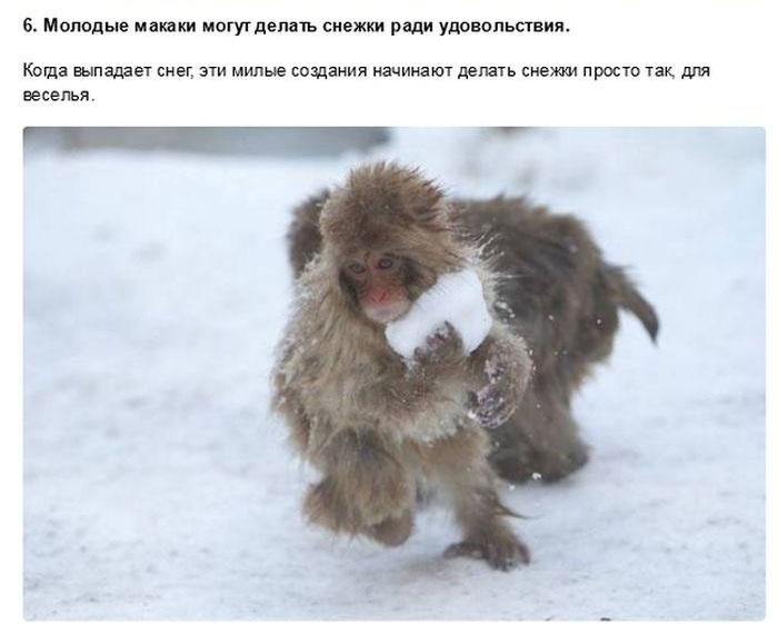 Забавные факты о животных (32 фото)
