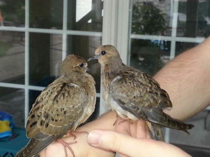 Птенцы, выпавшие из гнезда во время шторма (10 фото)