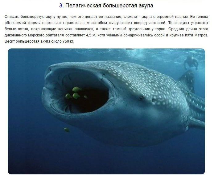 Странные и необычные обитатели подводного мира (10 фото)