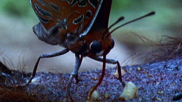 9 видов животных, любящих кровь