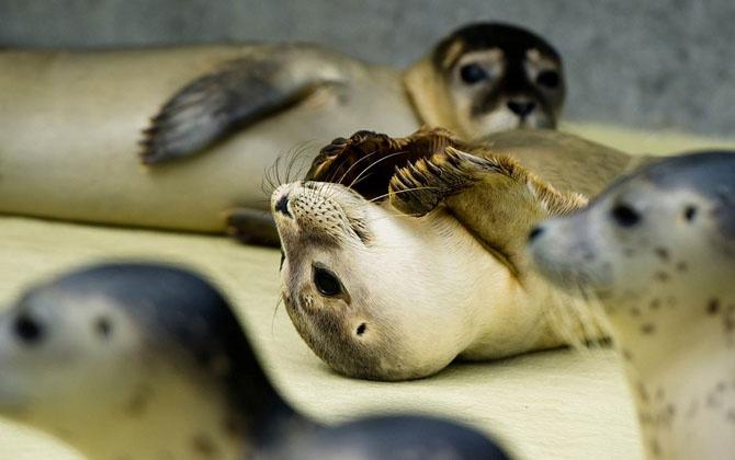 Фотографии животных за неделю (21 фото)