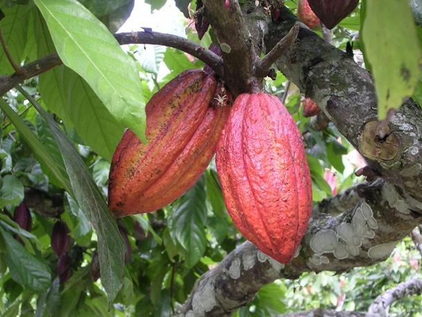 23 «вкусных» факта о шоколаде