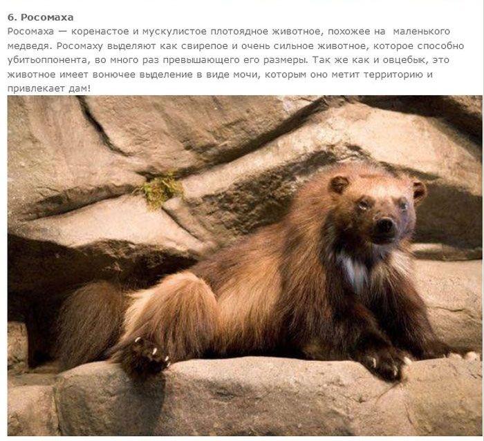 Топ-7 самых вонючих животных в мире (14 фото)