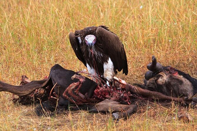 Самые опасные пернатые хищники в мире (21 фото)