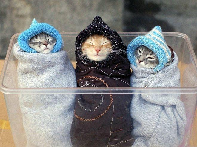 Новый тренд: Кошачья шаурма