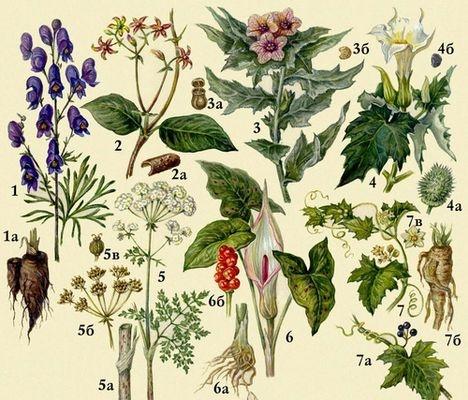Топ 7 самых опасных растений России