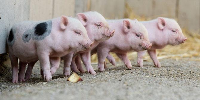 Фотографии животных за неделю (25 фото)