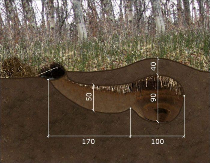 Как выглядит медвежья берлога изнутри (3 фото)
